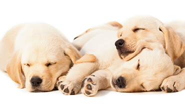 3 puppies enjoying the 3 year IRA bonus offer. Ask your local branch for more information